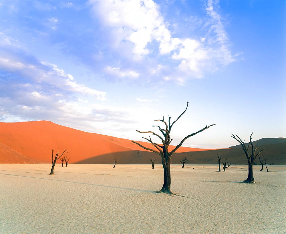 Dead trees and orange sand dunes, Dead Vlei, Sossusvlei dune field, Namib-Naukluft Park, Namib Desert, Namibia, Africa