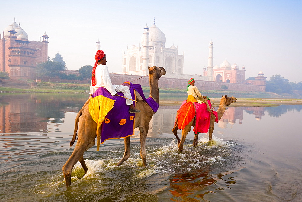 Man and boy riding camels in the Yamuna River in front of the Taj Mahal, UNESCO World Heritage Site, Agra, Uttar Pradesh, India, Asia  - 794-3692