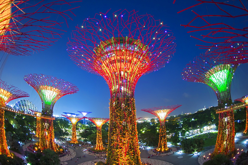 Supertrees at Gardens by the Bay, illuminated at night, Singapore, Southeast Asia - 794-4550