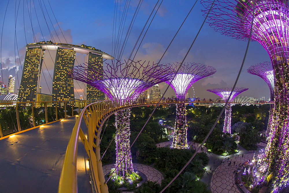 Supertrees at Gardens by the Bay, illuminated at night, Singapore, Southeast Asia - 794-4551