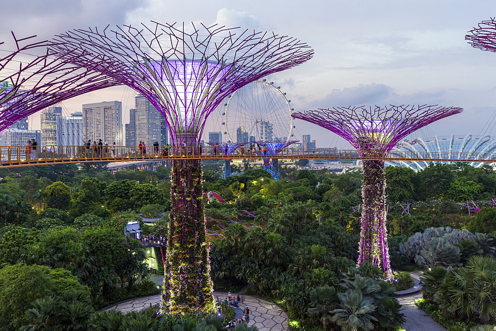 Supertrees at Gardens by the Bay, illuminated at night, Singapore, Southeast Asia - 794-4557