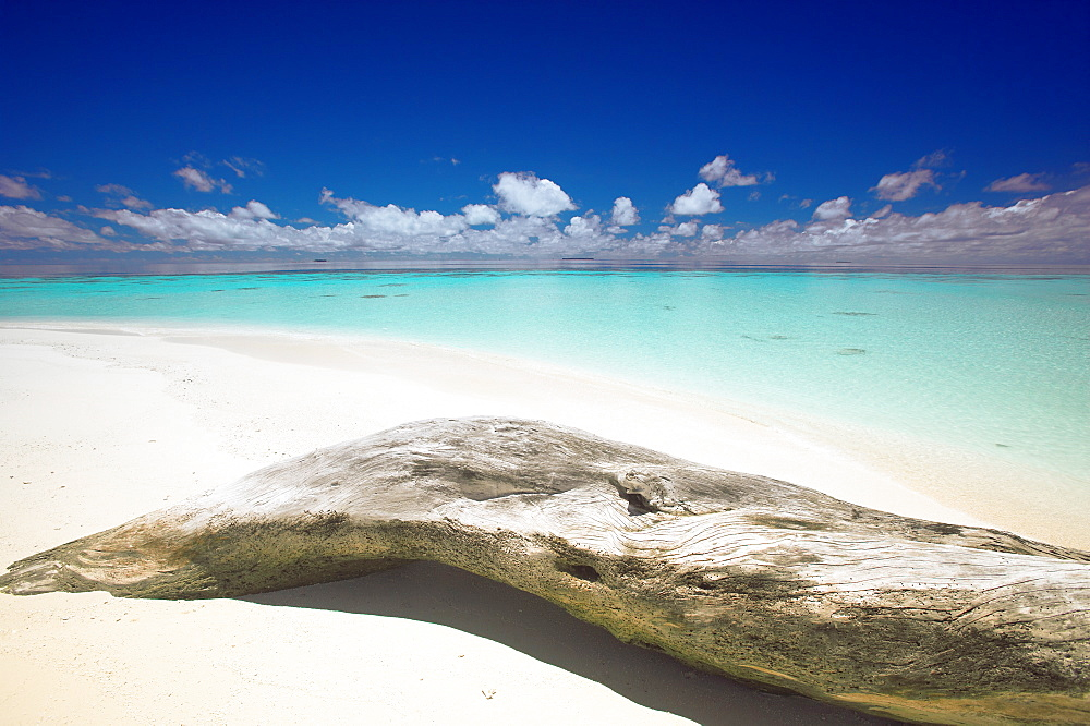 Driftwood on the beach, Maldives, Indian Ocean, Asia