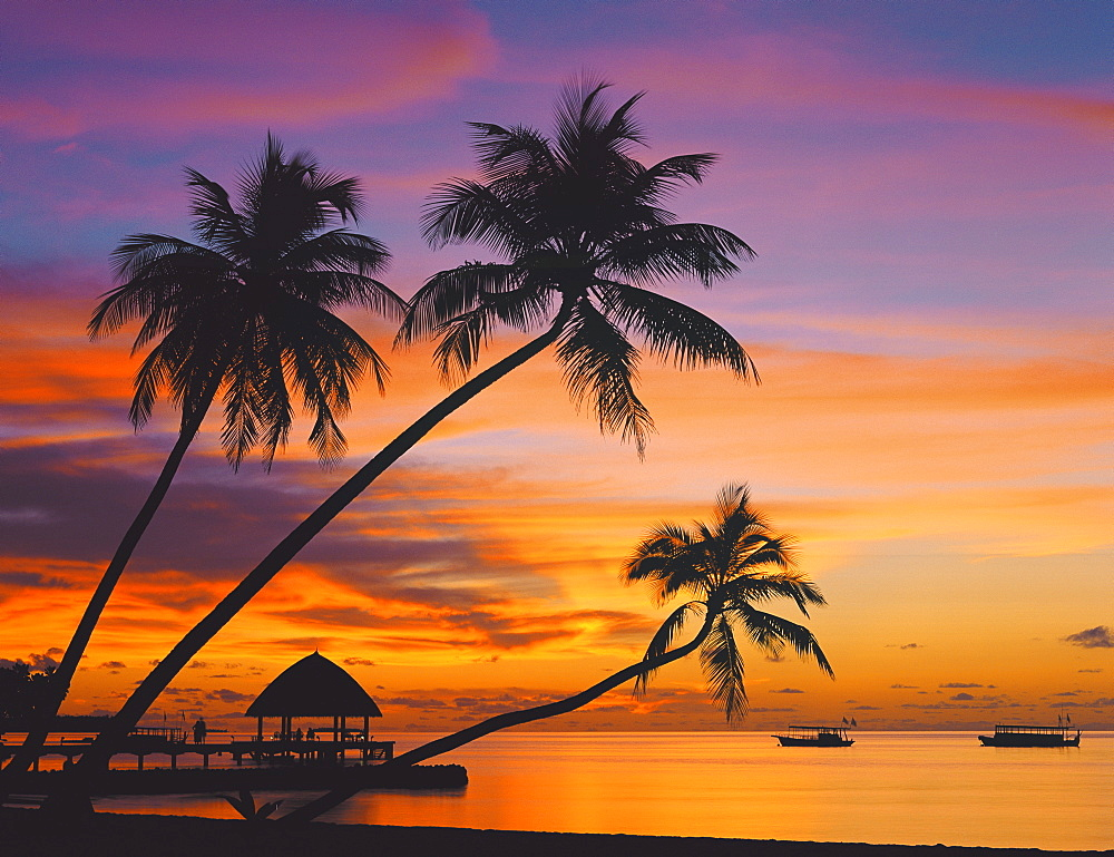 Palm trees and ocean at sunset, Maldives, Indian Ocean, Asia - 795-172