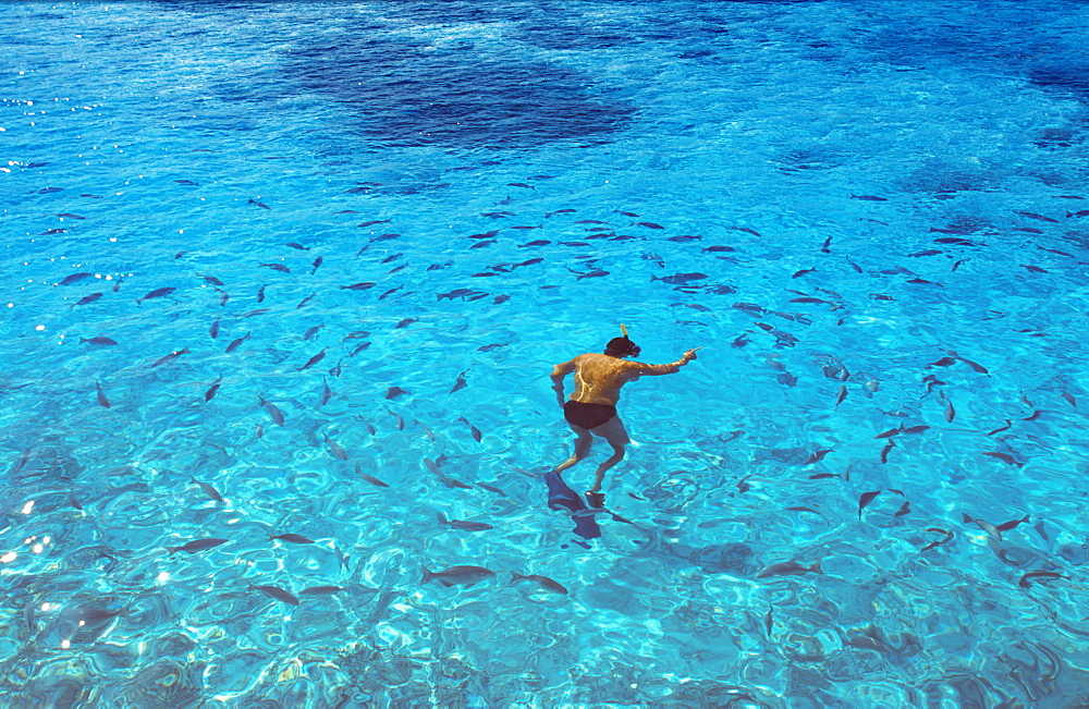 Man snorkeling, Maldives, Indian Ocean, Asia