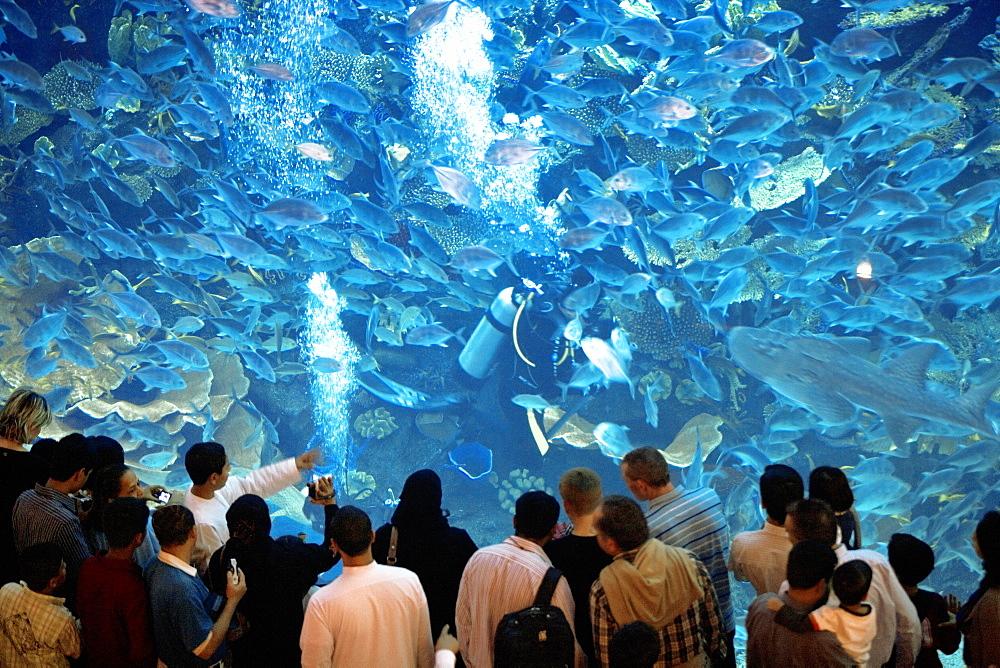 The Dubai Mall Aquarium, Dubai, United Arab Emirates, Middle East
