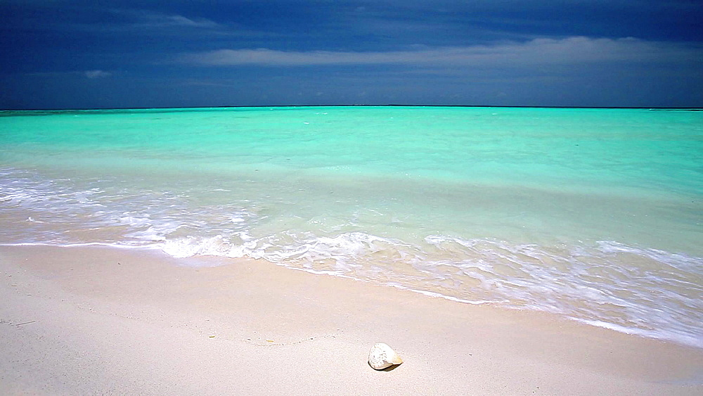 Shell on a tropical beach, Maldives - 795-496