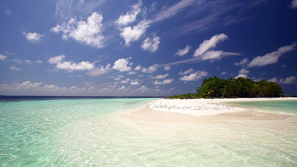 Desserted tropical island and birds flying, Maldives, Indian Ocean  - 795-547