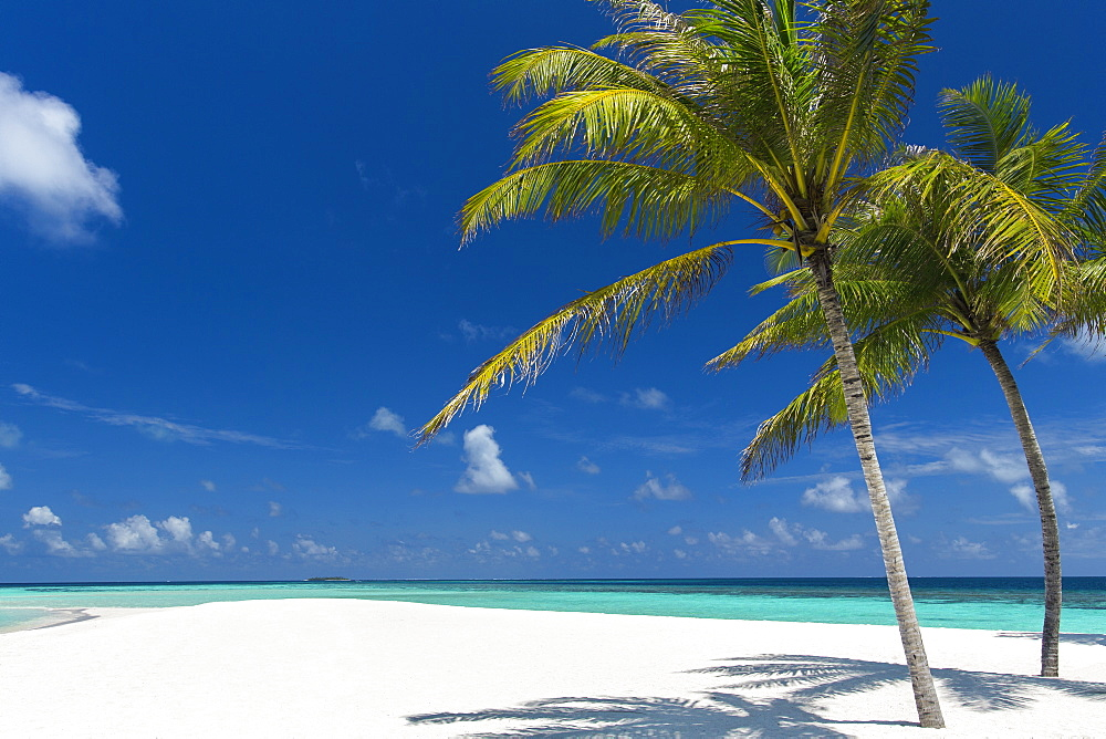 Palm trees and tropical beach, Maldives, Indian Ocean, Asia