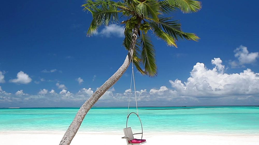Swing Hanging On Palm Tree on tropical beach, maldives