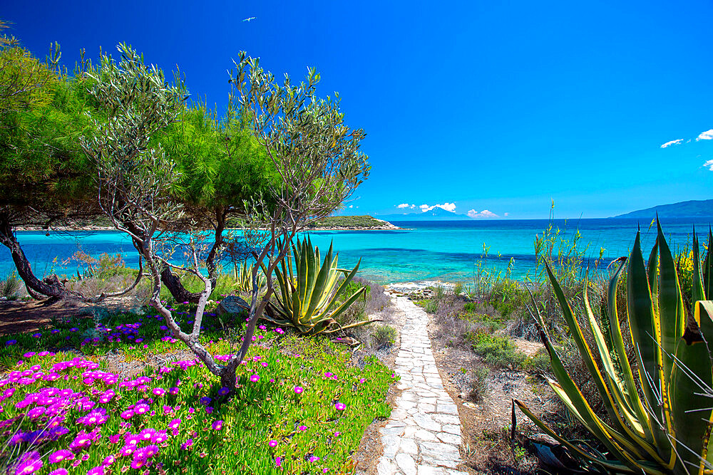 road to the beach, halkidiki, greece - 795-610