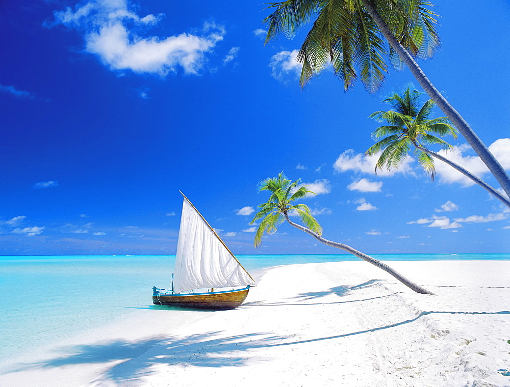 Dhoni (traditional boat) moored by empty beach, Maldives, Indian Ocean, Asia - 795-69
