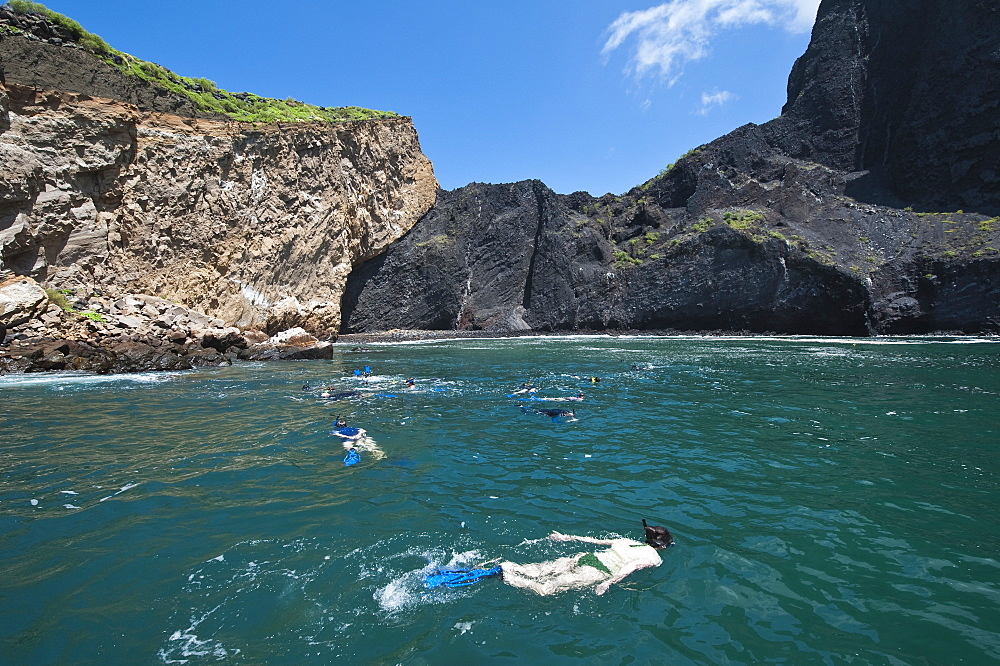 Snorkeling at Vincente Roca Point on Isla Isabela (Isabela Island), Galapagos Islands, UNESCO World Heritage Site, Ecuador, South America