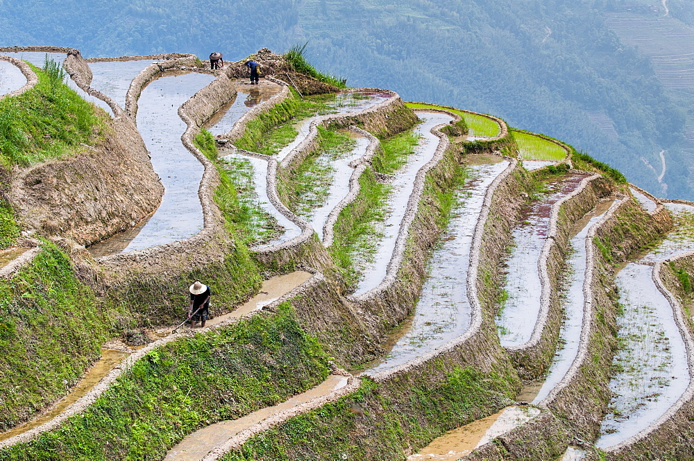 Dragon Spine Rice Terraces, Longsheng, Guangxi, China, Asia