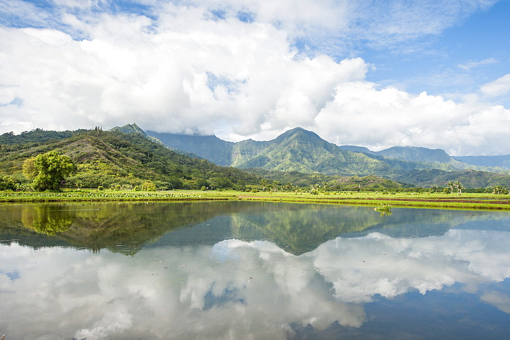 Hanalei National Wildlife Refuge, Hanalei Valley, Kauai, Hawaii, United States of America, Pacific