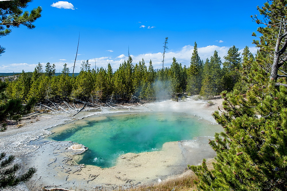 Emerald Spring in Norris Geyser Basin, Yellowstone National Park, UNESCO World Heritage Site, Wyoming, United States of America, North America