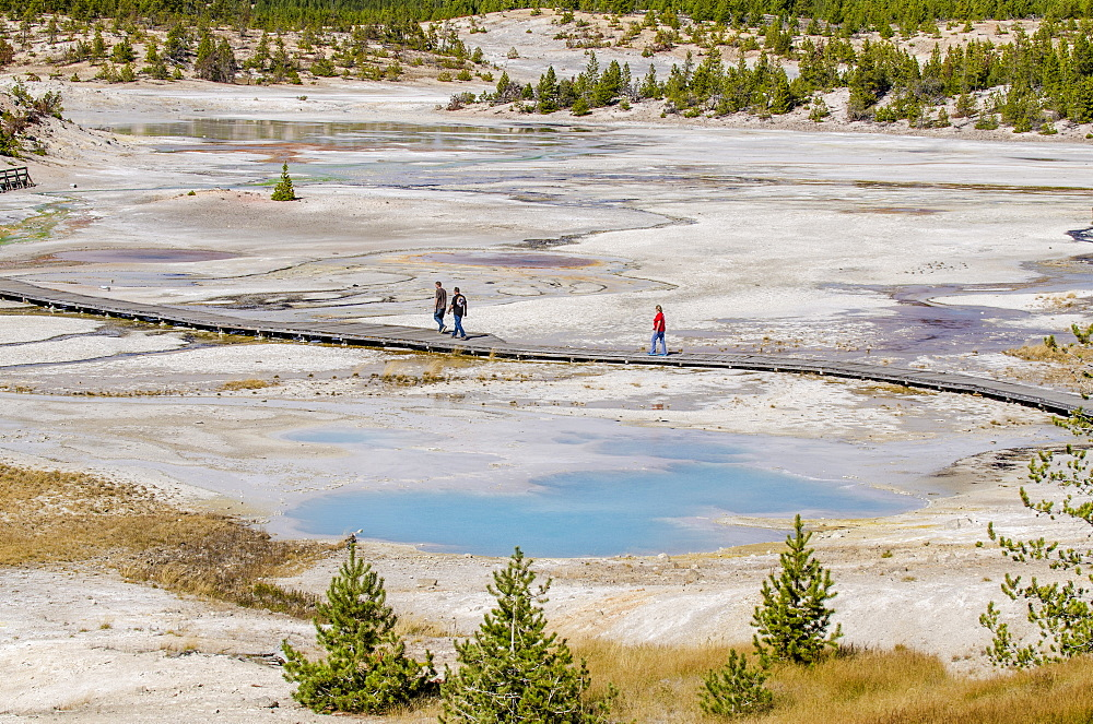 Norris Geyser Basin, Yellowstone National Park, UNESCO World Heritage Site, Wyoming, United States of America, North America