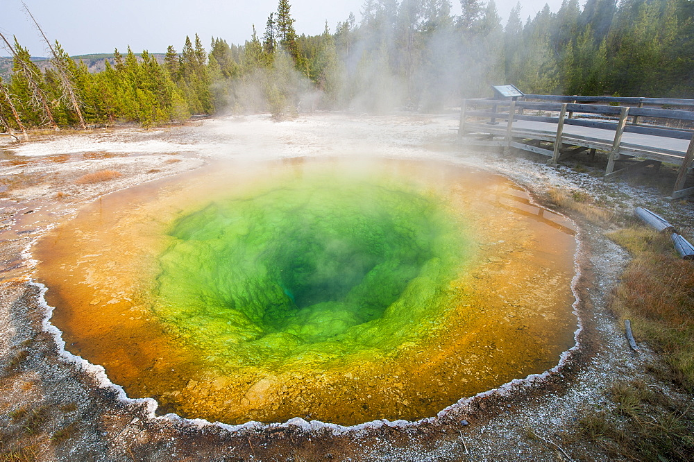 Morning Glory Pool in Upper Geyser Basin, Yellowstone National Park, UNESCO World Heritage Site, Wyoming, United States of America, North America