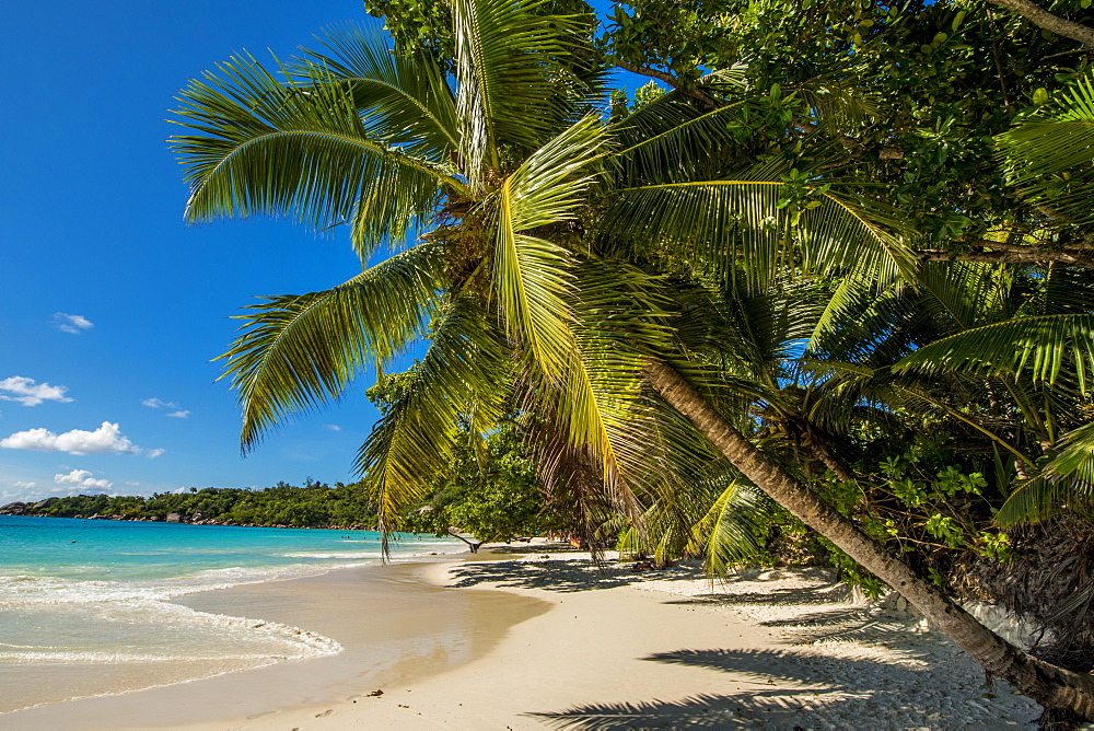 Anse Lazio Beach, Praslin, Republic of Seychelles, Indian Ocean, Africa - 796-2345
