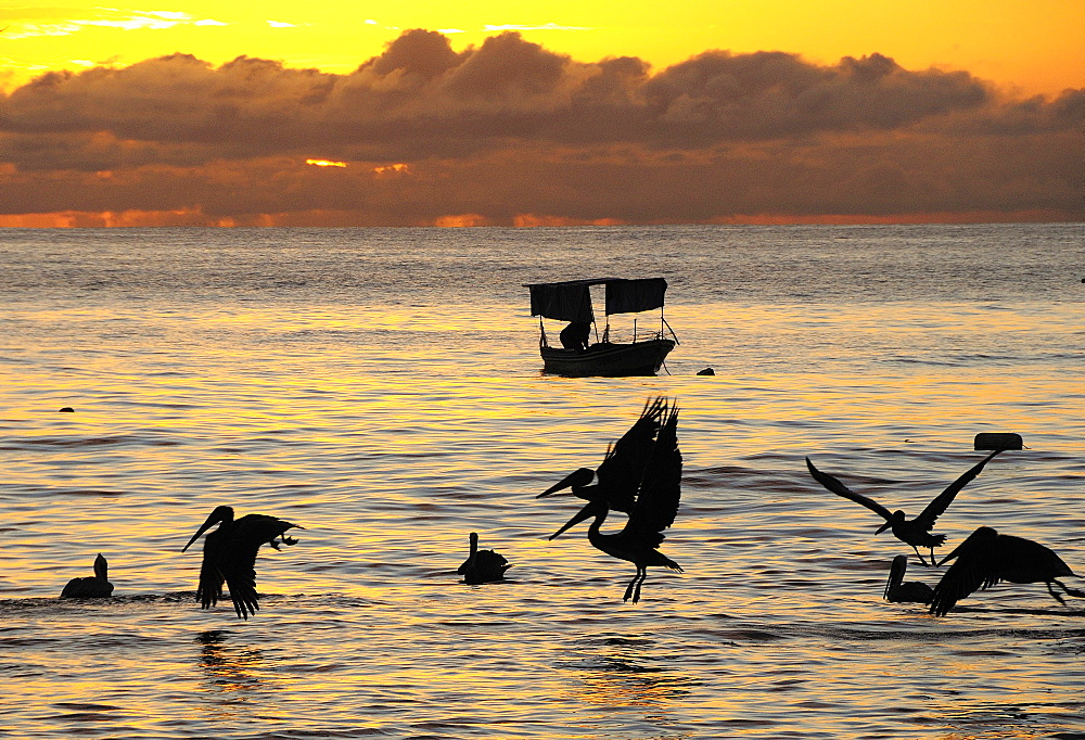 Mexico, Jalisco, Puerto Vallarta, Playa Olas Altas Pelicans and fishing boat silhouetted on the water at sunset.