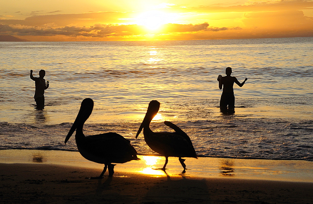 Mexico, Jalisco, Puerto Vallarta , Playa Olas Altas Two pelicans on the beach and two fishermen standing knee deep in the water silhouetted at sunset.