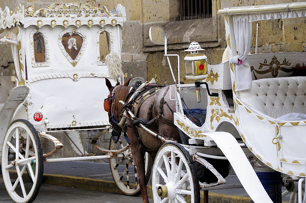Mexico, Jalisco,  Guadalajara, White and gold painted horse drawn tourist carriages queue in line on street.
