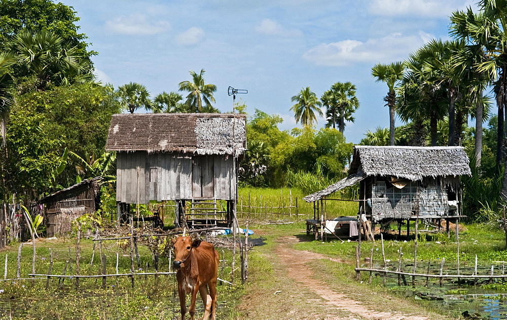 Cambodia, Architecture, Rural stilt housing.