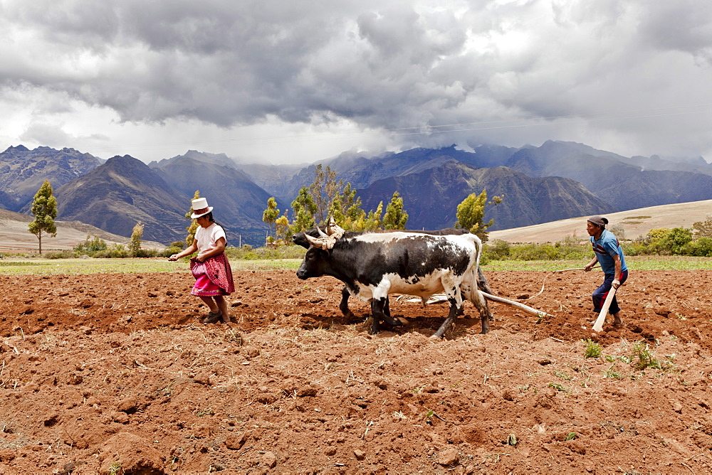 Peru, Chinchero, Husband and Wife farmers planting corn.