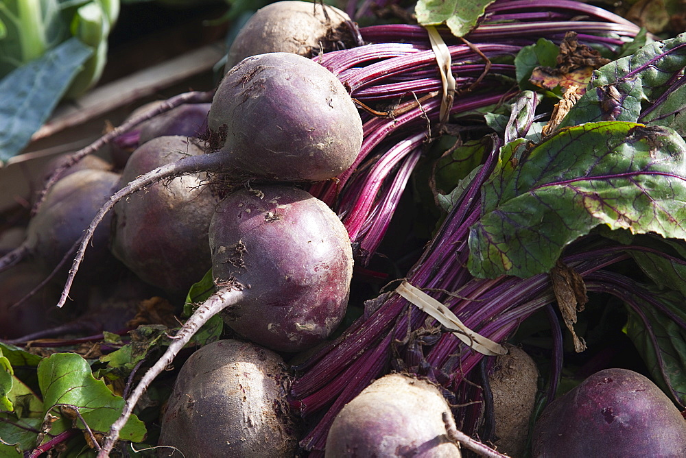Plants, Vegetables, Beetroot, England West Sussex Funtingdon Beetroot on sale in farm shop.