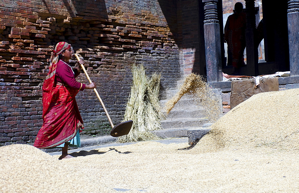 Nepal, Bhaktapur, Suryamadhi area Woman tossing grain in sun.