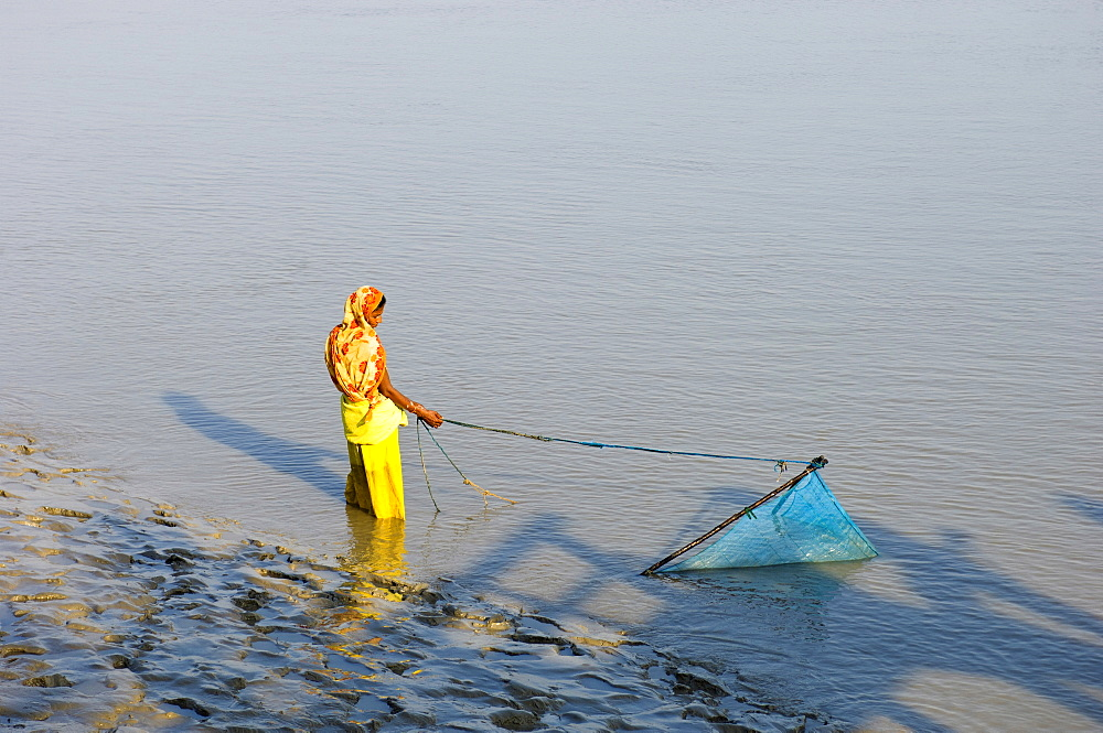 Bangladesh, Khulna Division, Shyamnagar, Woman trawling for shrimp fry with scoop net in the Sundarbans mangrove forest, UNESCO World Heritage Site