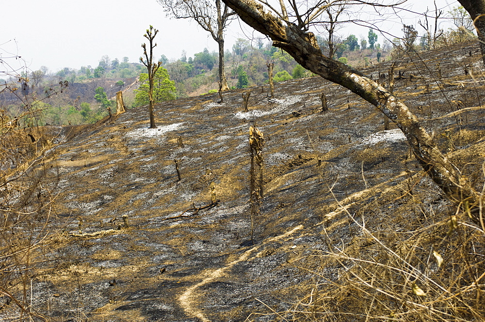Bangladesh, Chittagong Division, Bandarban, Hillsides burned in the traditional slash and burn style of juma agriculture.