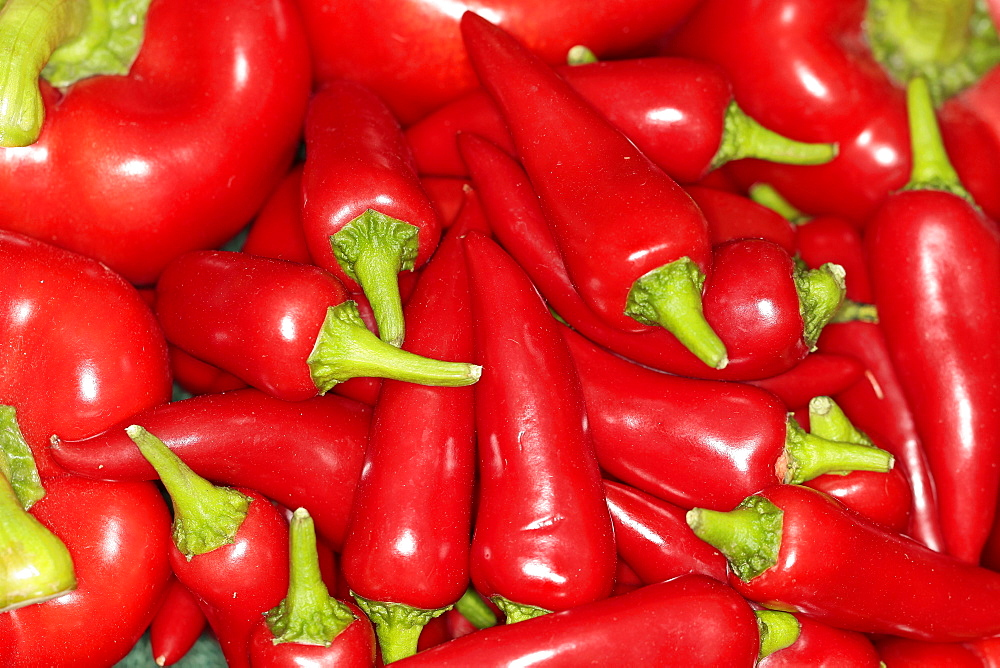 Plants, Fruit, Chilli Peppers, Red Chilli, close up of Capsicums for sale. - 797-11510