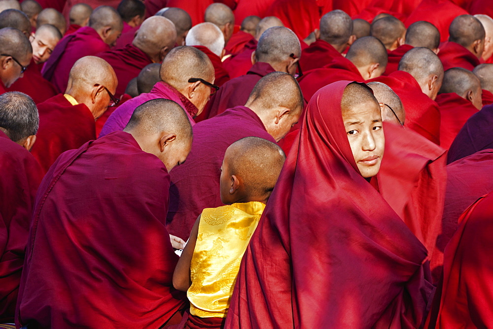 India, Bihar, Bodhgaya, Rear view of large group of seated Buddhist monks in the grounds of the Mahabodhi Temple, with one young monk turning to look at camera, young monk in yellow stands out.