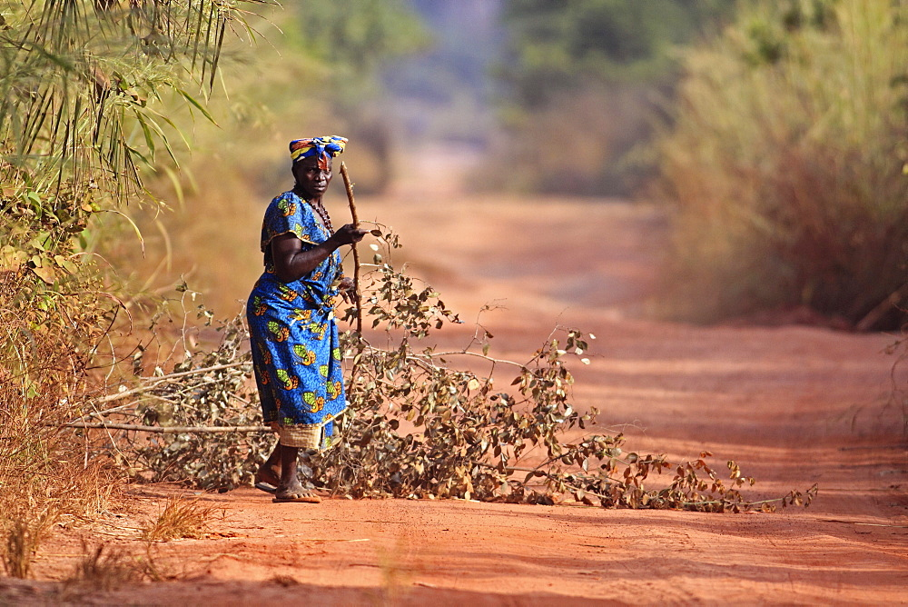 Gambia, Woman collecting branches on dirt road. - 797-12976