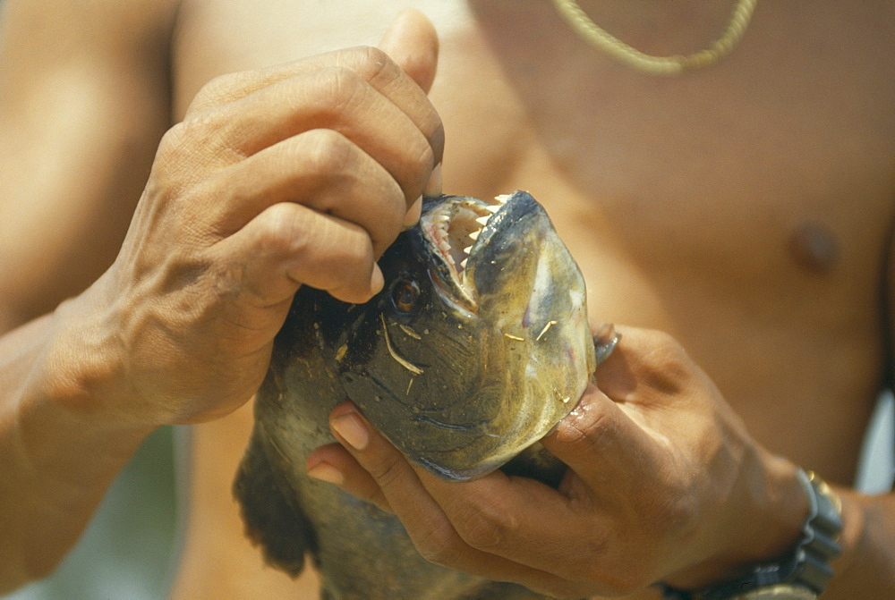 BRAZIL Pantanal Piranha Fish Man opening mouth of fish to exposed teeth