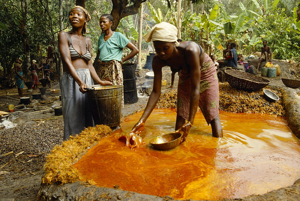 SIERRA LEONE  The Mende Women processing Palm Oil.