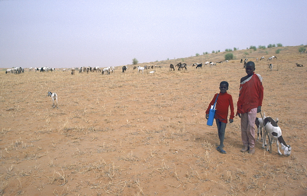 BURKINA FASO Sahel Shepherd boys with flock grazing on sparse vegetation.