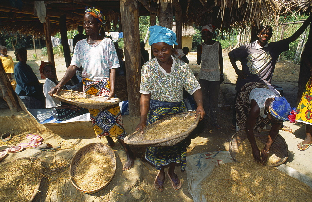Liberia, Margibi Wohn Women winnowing grain.