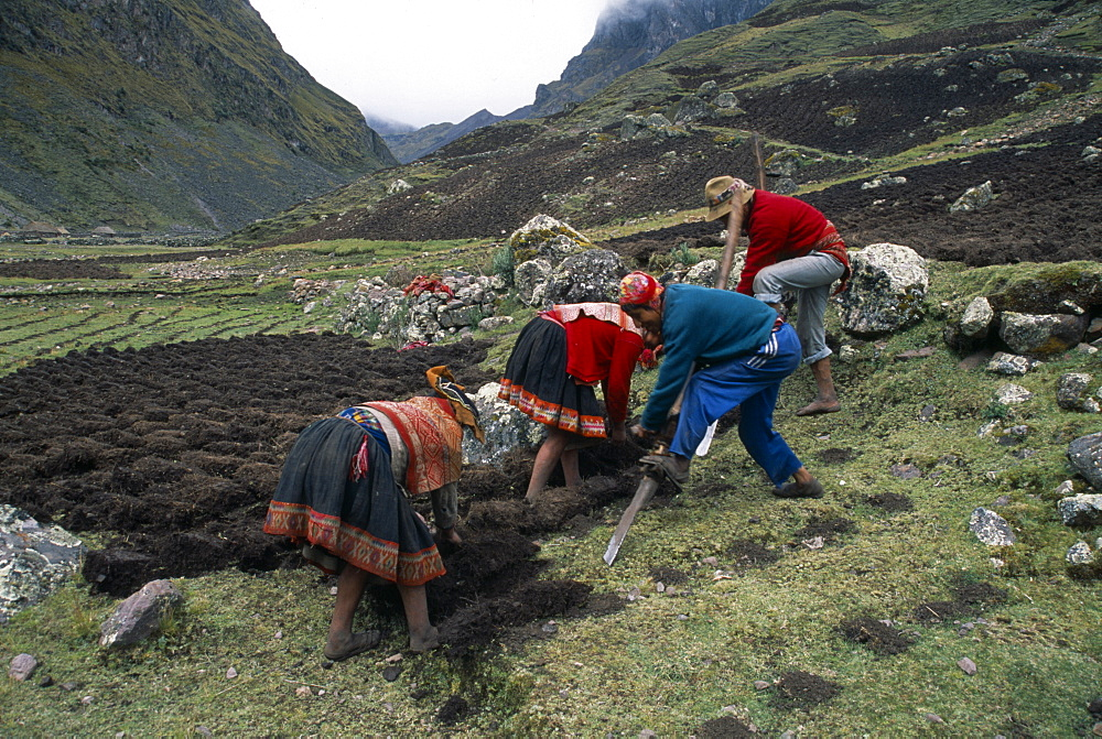 PERU Andes Cusco Cancha Cancha.  Quechua Indian men and women using traditional method to plough field by hand.  Cuzco