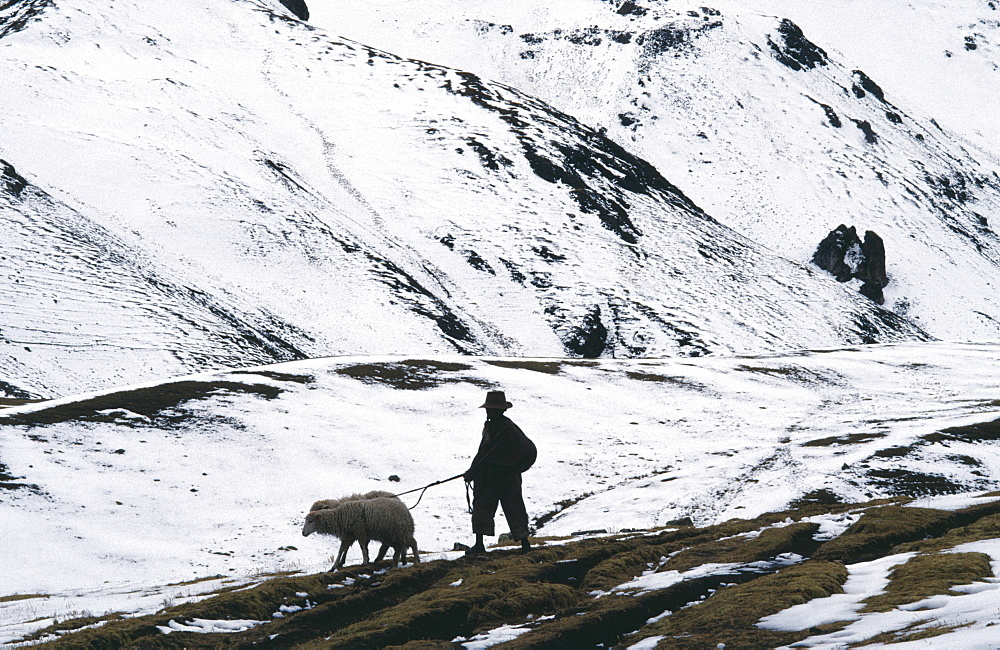 PERU  Cordillera Vilcanota Young boy taking sheep to Pitumarca to sell in snow covered landscape. American Peruvian South America Hispanic Latin America Latino  American Peruvian South America Hispanic Latin America Latino  - 797-2817