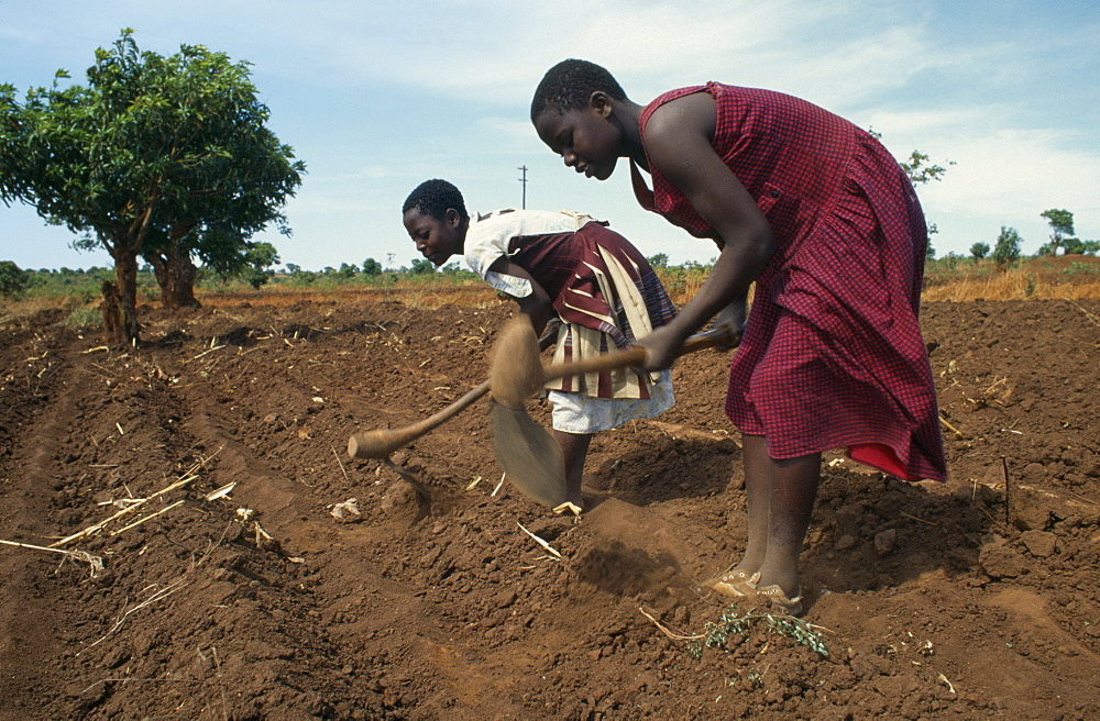 MALAWI  Farming Girls working in fields near Lilongwe.  The soil is very dry due to the lateness of the rains