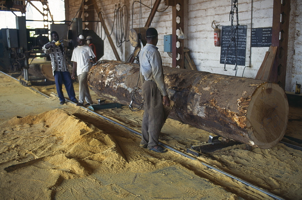 IVORY COAST  San Pédro Timber industry.  Saw mill interior and workers with felled tree and sawdust covered floor.  Côte d Ivoire  deforestation
