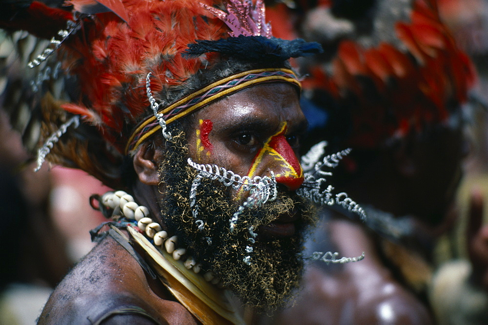 PAPUA NEW GUINEA  Chimbu Head and shoulders portrait of man wearing traditional head-dress of red feathers with shell necklaces and nose piercing of white painted leaves.  Red and yellow face paint extending down nose and at side of eyes and beard tipped with yellow.