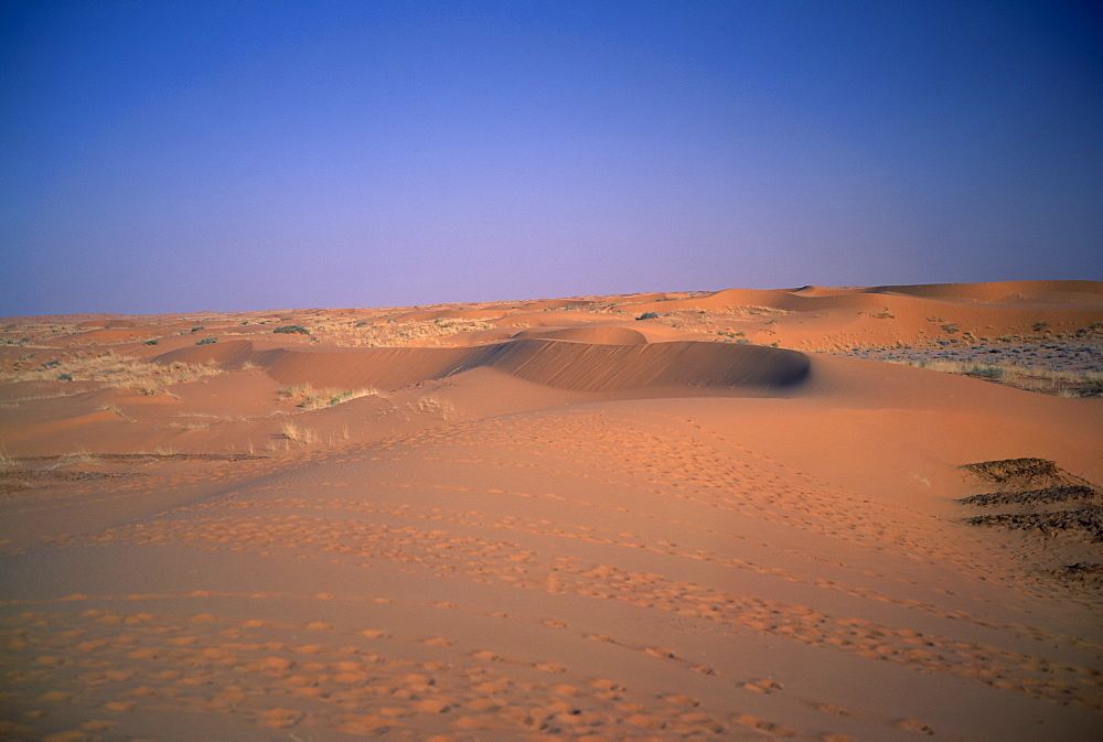 Low red sand dunes with tracks of sheep and goats in front, Howtah, Saudi Arabia