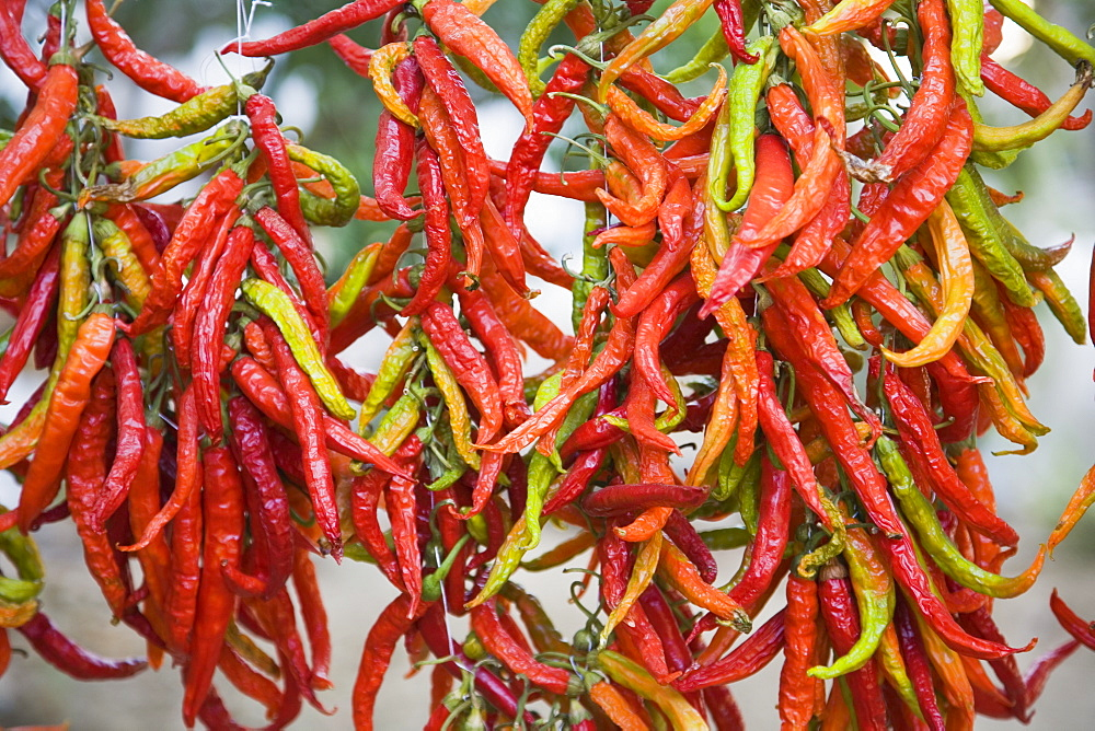Turkey, Aydin Province, Kusadasi, Strings of brightly coloured chilies hanging up to dry in late afternoon summer sunshine