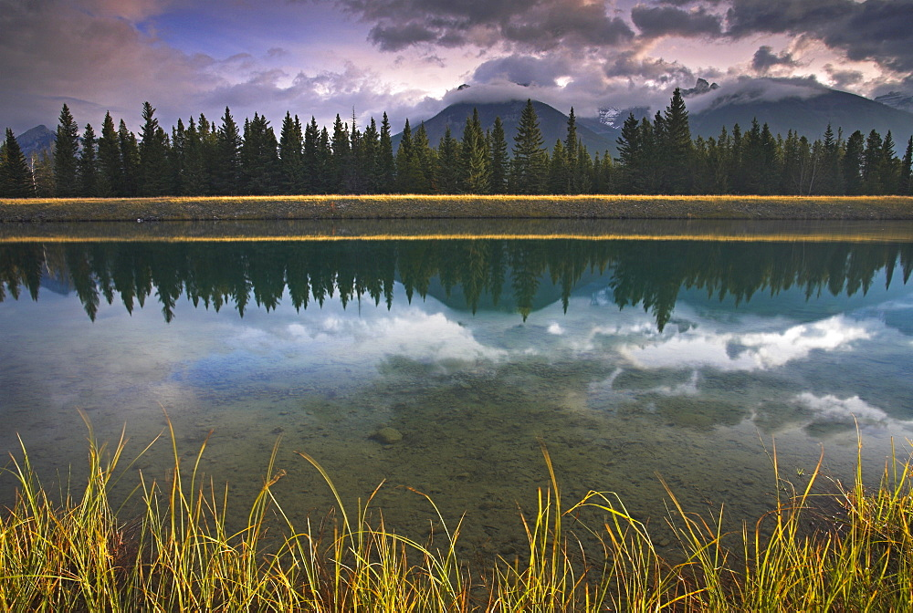 Early morning sunlight catches the grass growing beside the Cascade River, Banff National Park, UNESCO World Heritage Site, Alberta, Canada, North America