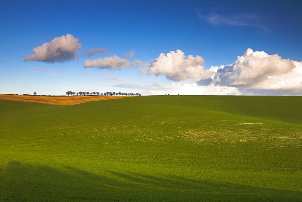 The South Downs near Winchester, Hampshire, England, United Kingdom, Europe