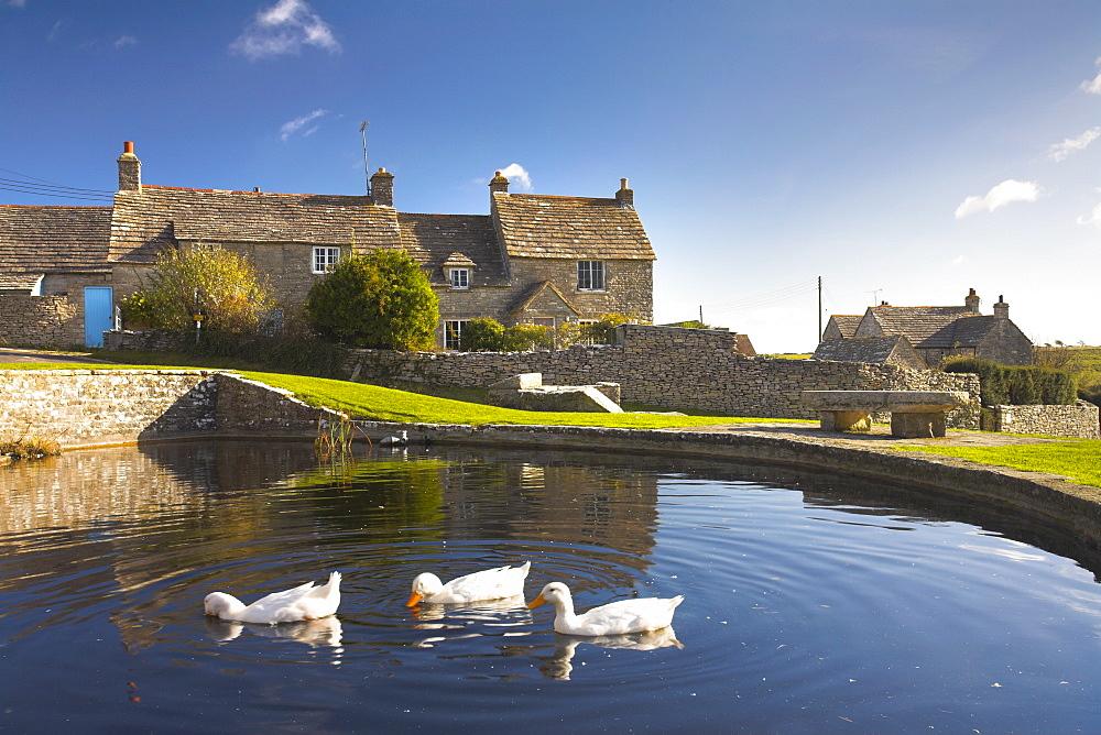 Duckpool in Worth Matravers village green, Dorset, England, United Kingdom, Europe