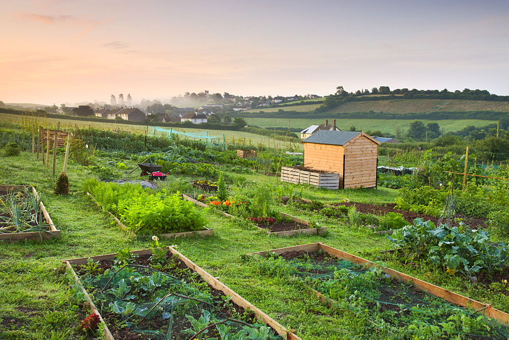 Raised beds on a rural allotment plot on the outskirts of the Mid Devon village of Morchard Bishop, Devon, England, United Kingdom, Europe