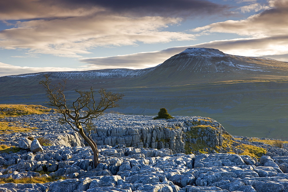 Snow capped Ingleborough from the limestone pavements on Twistleton Scar, Yorkshire Dales National Park, Yorkshire, England, United Kingdom, Europe